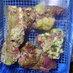 ROCHE VIVANTE Aragonite/kg